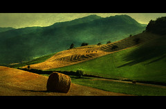 textured landscape (David Butali) Tags: trees summer italy mountain green texture field grass rural canon landscape it