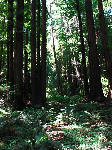muir-woods-IMG_5127