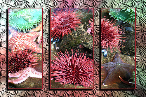 Sea Creatures Triptych