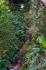 IMG_2583.jpg (igorschutz) Tags: planta flor festa aniversrio mata fazenda trilha karol crrego