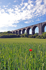 20 (benbobjr) Tags: uk england unitedkingdom yorkshire railway viaduct poppy disused southyorkshire conisbrough railwayviaduct conisbroughviaduct dearnevalleyrailway