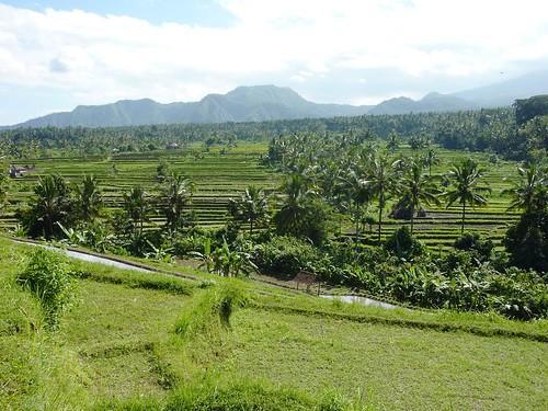 Bali-Tirtagangga (49)