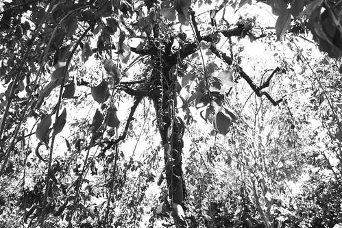町田樹 画像19