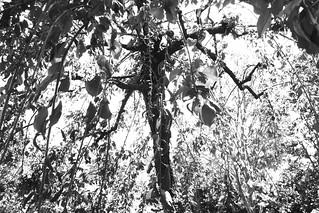 町田樹 画像6
