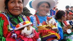 Huancavelica inaugurates first 'Festival del Cuy'