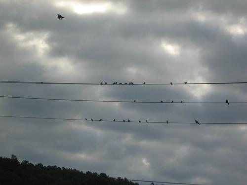 birds beneath a battling sky