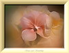 Sense and Sensibility (Jose Luis Mieza Photography) Tags: flowers flores flower fleur fleurs flor benquerencia florews reinante jlmieza reinanteelpintordefuego joseluismieza