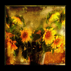 sunflowers  los girasoles (jesuscm) Tags: flowers stilllife flores yellow square nikon textures amarillo sunf