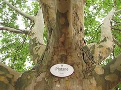 Baumbestimmung leicht gemacht