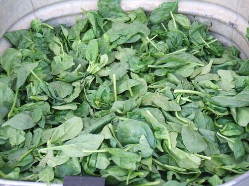 Dupont Circle, Washington, DC Freshfarm Market