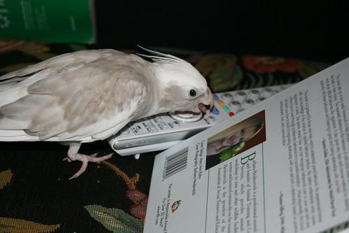 Parrot problem ;)