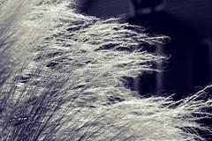whisper (M(elia)) Tags: silence breeze ineedsome nellyneroaction