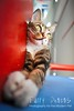 Stray@my Block (furry-photos) Tags: animal cat mammal feline stray impressedbeauty