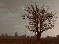 lone tree (amazingstoker) Tags: tree nature sepia landscape nikon hampshire coolpix lone lonely 995 dogmersfield monochrone