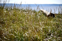 Breathless, we flung us on a windy hill, Laughed in the sun, and kissed the lovely grass. (Monty-e*) Tags: sea beach maine atlanticocean spiaggia oceano atlantico