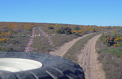 Namaqualand Wildflower Track, August 2010