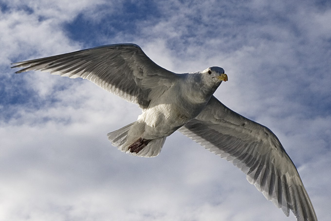 Seagulls-3104-detail