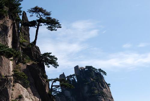 l29 - Beginning-to-Believe Peak Trees