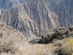 2010-4-peru-198-cabanaconde-colca canyon