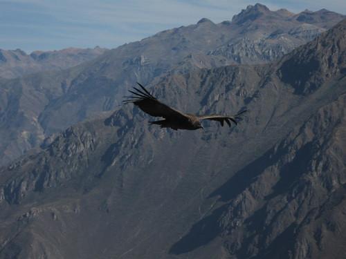 2010-4-peru-221-cabanaconde-cruz del condor