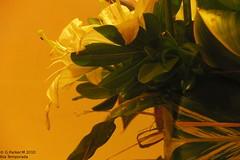 trilogia de flores parte 3 (Mex::::::Gabriel:::Parker::::::Arg. 2016 images) Tags: gotas detodounpoco trilogias gparkerm20106tatemporada
