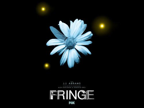 fringe wallpaper. Fringe Wallpaper