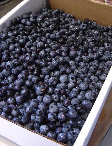 Wild Nova Scotia Blueberry Freezer Jam