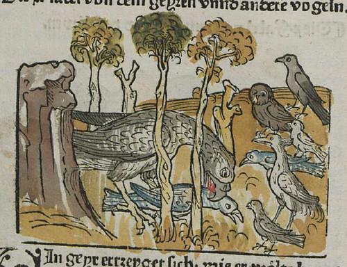 vultur et aves