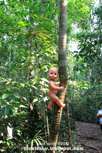 baby tied on tree