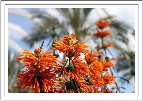 Orange beauty (Explored)