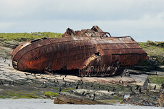 The wreck of Ben Barvis, Little Skerry, Pentland Skerries, Scotland (iancowe) Tags: scotland orkney little head scottish aberdeen hull wreck trawler firth skerry duncansby pentlandskerries benbarvis littleskerry