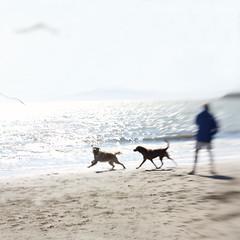 Fun At The Beach (VeryViVi) Tags: california motion blur beach dogs lensbaby action lensbabycomposer missvivigold
