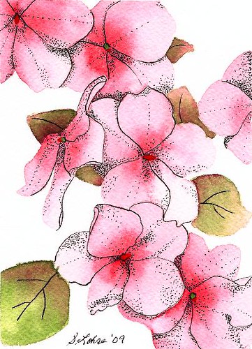 Impatiens, watercolor, ink