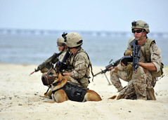 Land Warfare Exercise (US Navy) Tags: training military playa seal militar sniper usnavy arma entrenamiento unitedstatesnavy littlecreek marineros