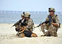 Land Warfare Exercise (US Navy) Tags: training military playa seal militar sniper usnavy arma entrenamiento unitedstatesnavy littlecreek marineros