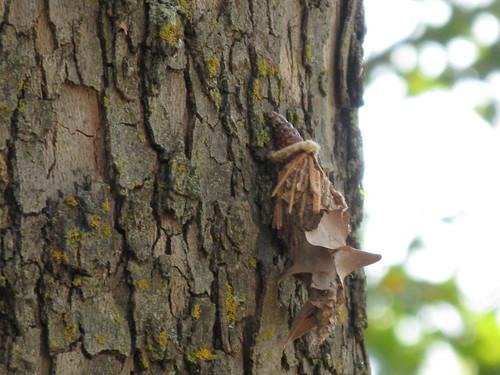Case moth 2