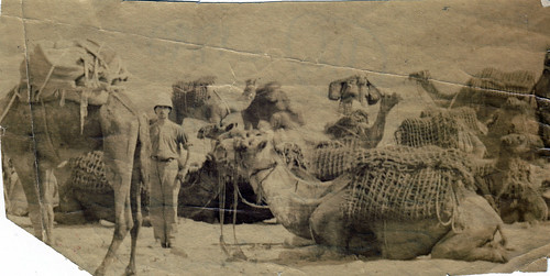"""No. 10 camels"" Imperial camel corps?"