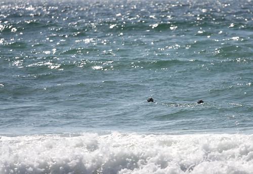 Sea otters are sea otters