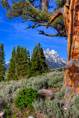 The Tetons & The Old Patriarch (txcraig75) Tags: wyoming grandtetonnationalpark gtnp tetoncounty cathedralgroup canon24105mm canon5dmarkii theoldpatriarch