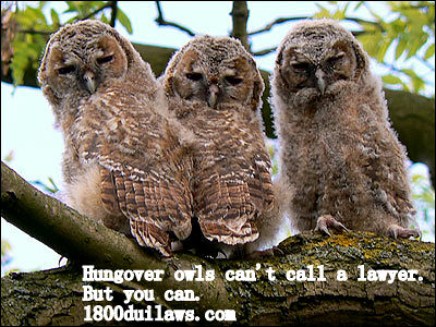 Hungover Owls Can't Call a Lawyer