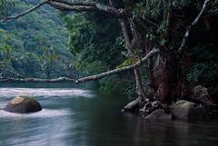 Anbo River (beeldmark) Tags: japan japanese kagoshima unescoworldheritagesite worldheritagesite  nippon yakushima nihon kyushu japonais worldheritage   japans japanisch anbo werelderfgoed anboriver   beeldmark anbou naturalworldheritage naturalworldheritagesite