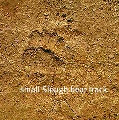 track5