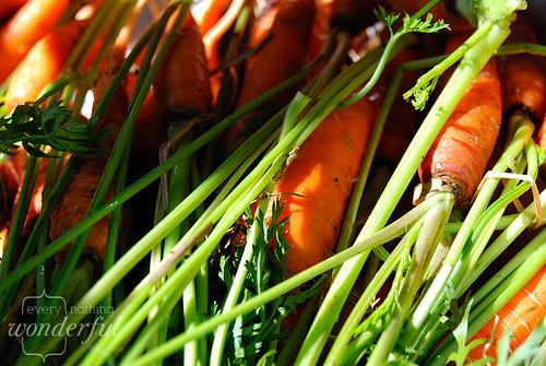 CarrotsClose1