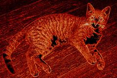 """Tyger, tyger, burning bright..."" Millie (14 August 2010) 0015pb 4x6 (edgarandron - Busy!) Tags: cats cute cat kitten feline neon tabby kitty kitties tabbies millie dilutetabby"