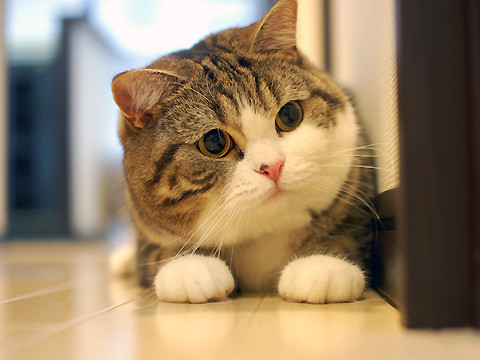 cute maru the cat pic