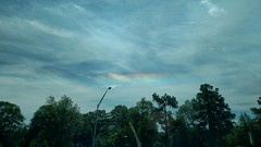 Cloud Iridescence, Florida, I-75, (wesbird72) Tags: iridescence cloud clouds cloudiridescence drive driving rainbow rainbows prism prisms colors colored light lights coloredlight coloredlights tree trees sky ominous ominoussky sparkle sparkly sparkling florida i75 puffy puffyclouds blue orange red reddish green greenish