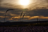 Golden sky (grundi1) Tags: sony alpha 68 ilca a68 sigma1770f2845dcmacro verlaufsfilter sunset sonnenuntergang grashalm straw vanagram flower blume nature sigma 1770 f2845