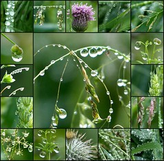 just walking in the rain .... (Edinburgh Nette ...) Tags: collages rain droplets weather june17 ribbet explore