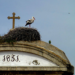 Cigüeña católica - Desde el 1851 (pom.angers) Tags: panasonicdmctz30 april 2017 spain españa andalusia andalucìa europeanunion elpuertodesantamaria bird stork church religion 1851 100 150 200