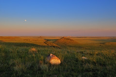 Soapstone to Rawhide Moonrise (Fort Photo) Tags: sunset summer moon nature landscape nikon colorado fortcollins luna moonrise co prairie powerplant grassland frontrange 2010 larimer csp d300 naturalarea nikon1755 clff laramiefoothills soapstoneprairie soapstoneprairienaturalarea